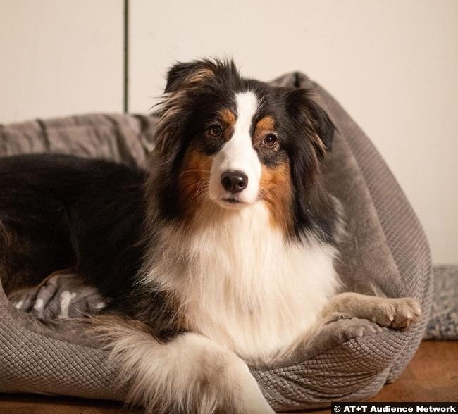 Mr Mercedes S03 Dog