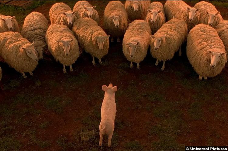 Babe Sheep